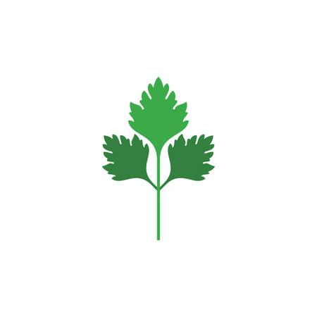 parsley plant logo vector icon design Illustration