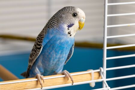 Portrait of a small parrot with shallow depth of field 版權商用圖片