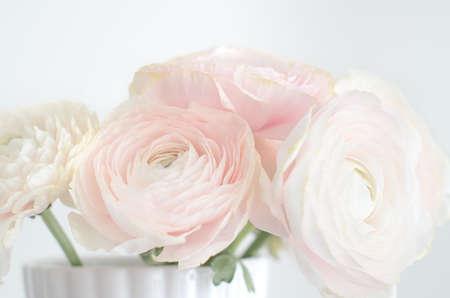 Hellrosa persischer Hahnenfuß Ranuncuus Bund in Vase Nahaufnahme gegen reines Weiß