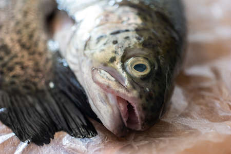 Rainbow trout head and eye close up macro shot on transparent foil set on wooden kitchen board 2020