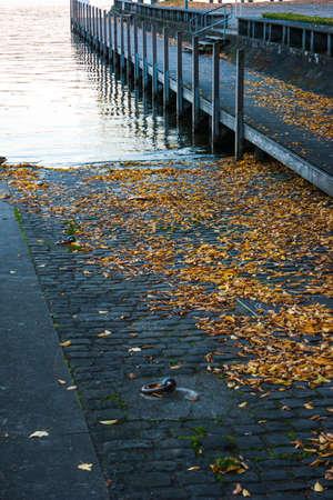 Boat ramp on lake Zurich Switzerland autumn foliage late October. 免版税图像