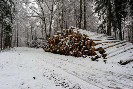 Cut stacked and marked tree trunks covered in snow in a forest pathway Switzerland early December.