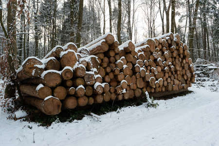 Cut stacked and marked tree trunks covered in snow in a forest pathway Switzerland.