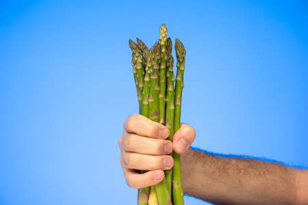 Bunch of raw fresh asparagus stems held in hand by Caucasian male hand isolated on blue background studio shot.