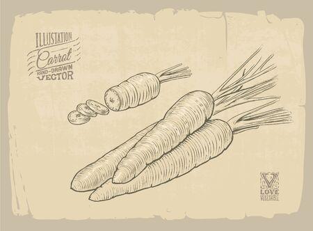 old fashioned vegetables: Vector handdrawn illustration of carrot Illustration