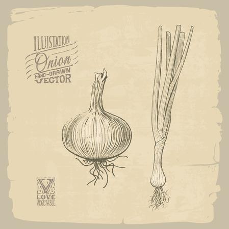 Vector handdrawn illustration of onion 向量圖像