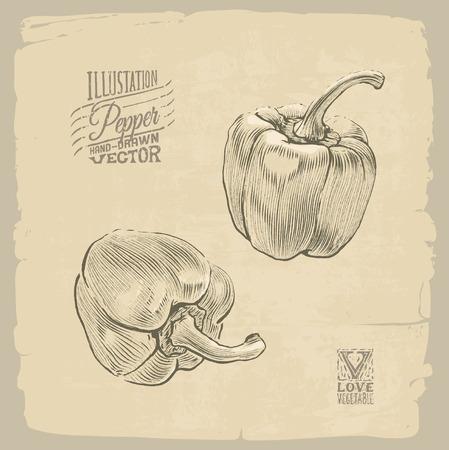 old fashioned vegetables: Vector handdrawn illustration of pepper