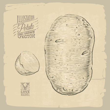 old fashioned vegetables: Vector handdrawn illustration of potato