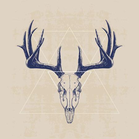 鹿の頭蓋骨、手描きの図
