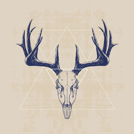 deer skull, hand drawn illustration 矢量图像