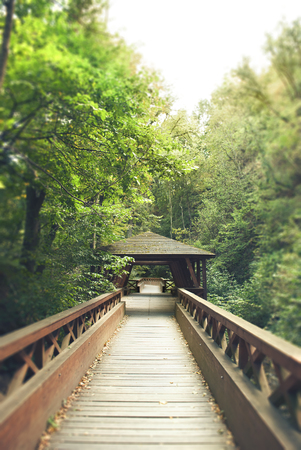 foot bridges: wooden bridge in forest in the end of summer