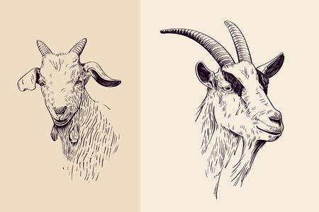 cabras: cabra, ilustración dibujados a mano, retrato Vectores