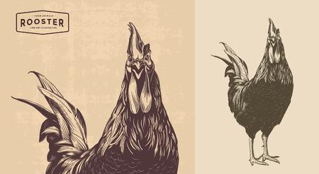 オンドリ、コックおんどりビンテージ イラスト、ライン アート