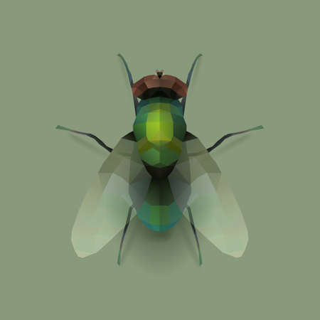 insect flies: fly, realistic polygon illustration Illustration