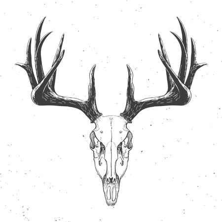 calavera: cráneo de venado en la ilustración blanca, vendimia Vectores