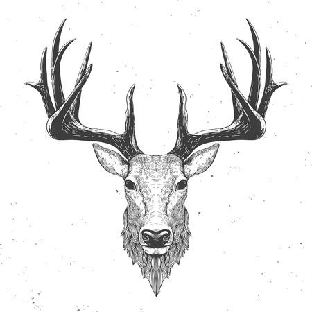 cuernos: cabeza de ciervo en la ilustración blanca, vendimia Vectores