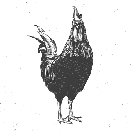 rooster black and white, hand drawn vintage illustration