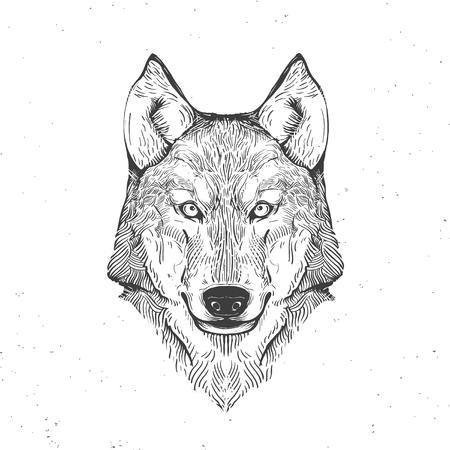 wolf hoofd op wit, vintage illustratie