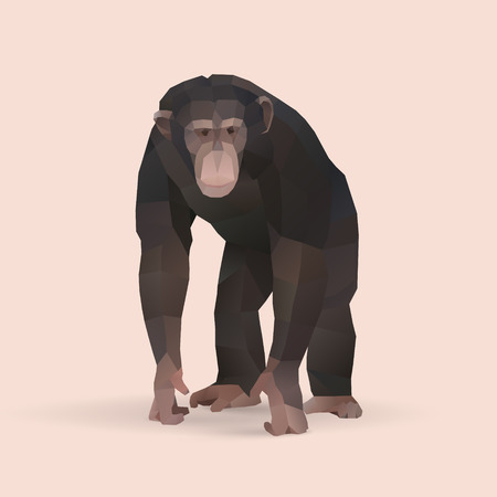 chimpanzee, polygonal geometric animal illustration