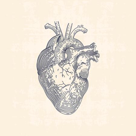 人間の心のヴィンテージの線画イラスト  イラスト・ベクター素材