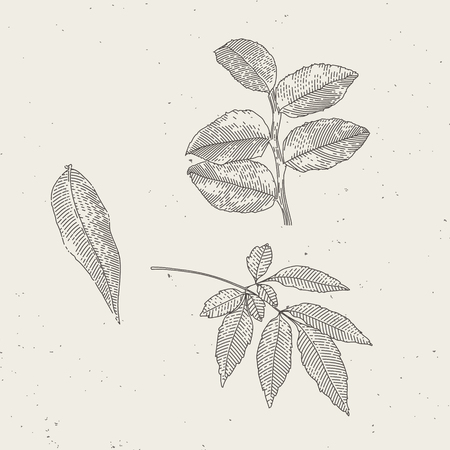 Endgraved vintage leafs illustrations