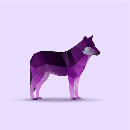 Wild low poly purple wolf, vector illustration 矢量图像