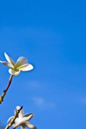 青い空の花。グリーティング カードの背景のグラフィック情報や画像を投稿するための理想的です 写真素材