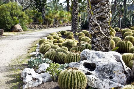 A Group of spherical cactuses in the garden