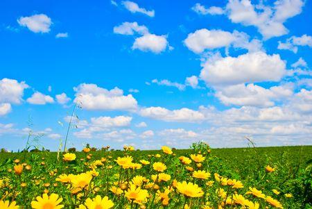 Un paysage sauvage d'une prairie avec des fleurs jaunes. Banque d'images