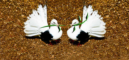 pidgeon: Two white doves holding green branches.