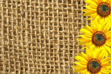 Three sunflowers on the sackcloth background.