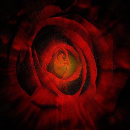 Close-up opname van een roze roos behandeld door grafische editor