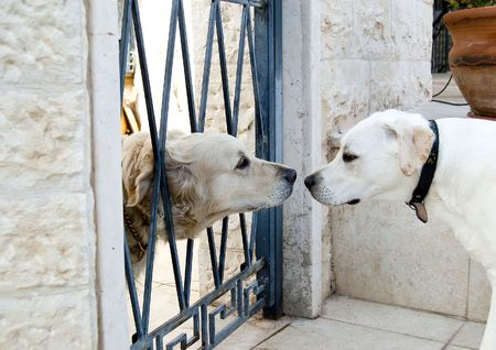 pure bred: The very first meeting of the new neighbours