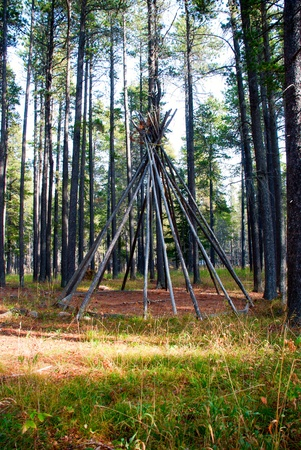 wigwam: Autumn in a forest. Trees set as an wigwam. Stock Photo