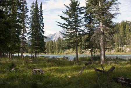 alberta: Banff beautiful National Park in Alberta, Canada Stock Photo