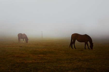 hazy: Wild brown horses grazing pastures with hazy weather