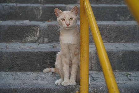 Cute yellow cat