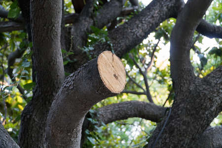 tree removal service: Cut young tree