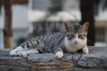 gray cat: Cute street cat