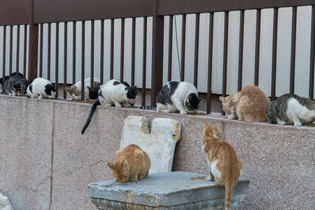 tired: eating street cats