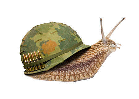 soldier snail