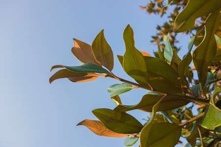 The sky and rubber tree