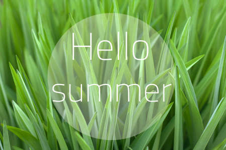 Hello summer lettering. Collage of vivid green grass beautiful natural background.