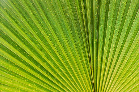 Close up of Tropical Green Leaf Texture. Beautiful Background for Design