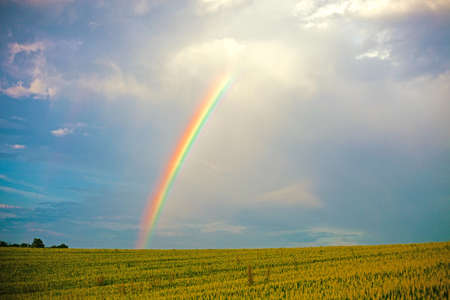 Vibrant natural rainbow in the dramatic blue sky over the summer green field. Vivid summer or spring landscape.