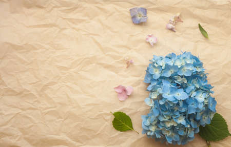 Hydrangea blue flowers composition against crumpled paper trendy background. Flat lay, copy space.