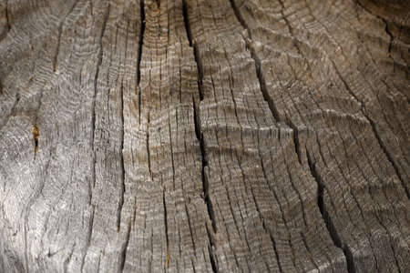Old wood cracked texture. Tree bark pattern background. Natural backdrop.