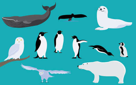 Set of arctic and antarctica animals penguin polar bear whale owl seal
