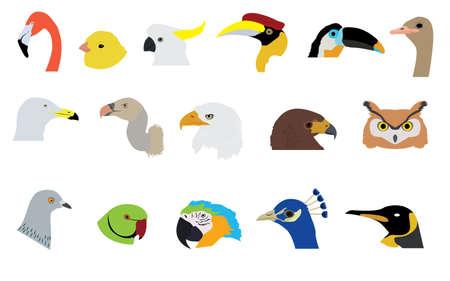 pigeon owl: Set of Birds  Illustration