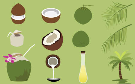 coconut tree: Set of Products of Coconut Tropical Fruit Illustration